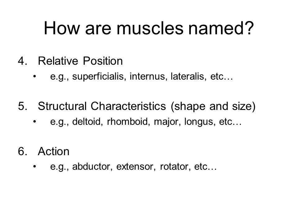 How are muscles named Relative Position