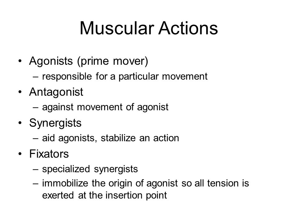Muscular Actions Agonists (prime mover) Antagonist Synergists Fixators