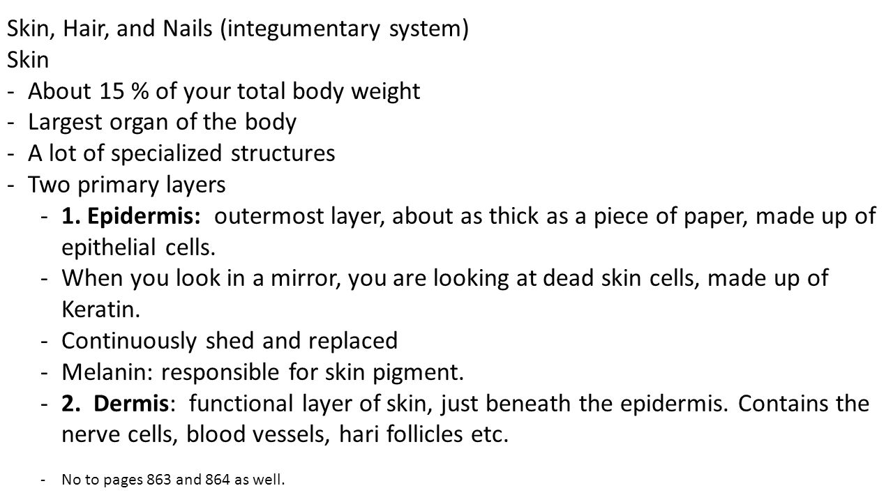 Skin, Hair, and Nails (integumentary system) Skin