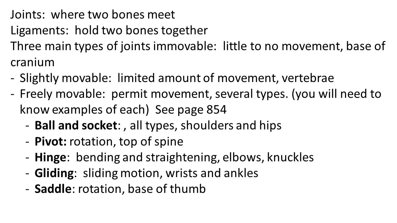 Joints: where two bones meet