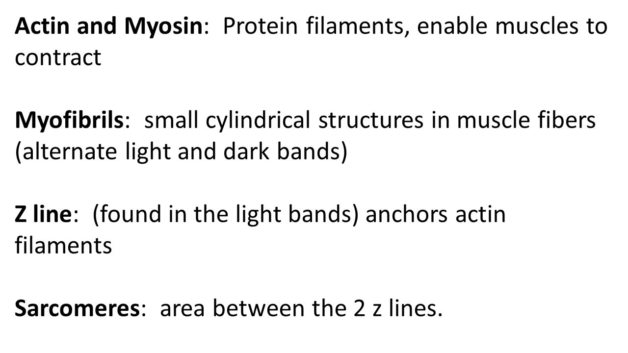 Actin and Myosin: Protein filaments, enable muscles to contract