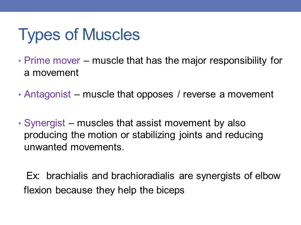 Types of Muscles Prime mover – muscle that has the major responsibility for a movement. Antagonist – muscle that opposes / reverse a movement.