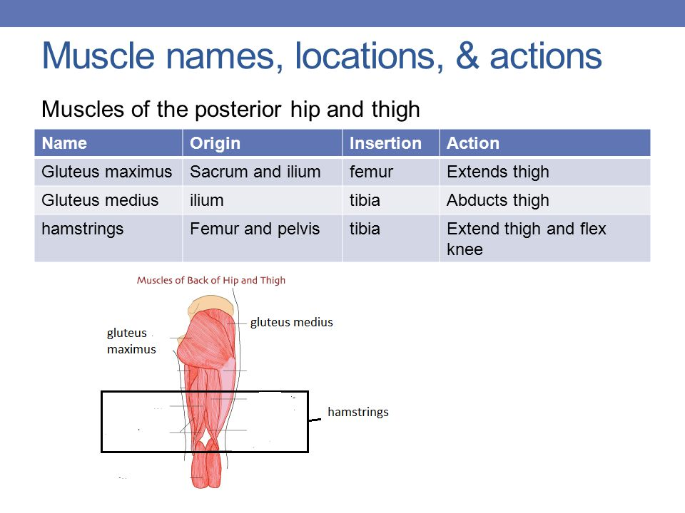 Muscle names, locations, & actions