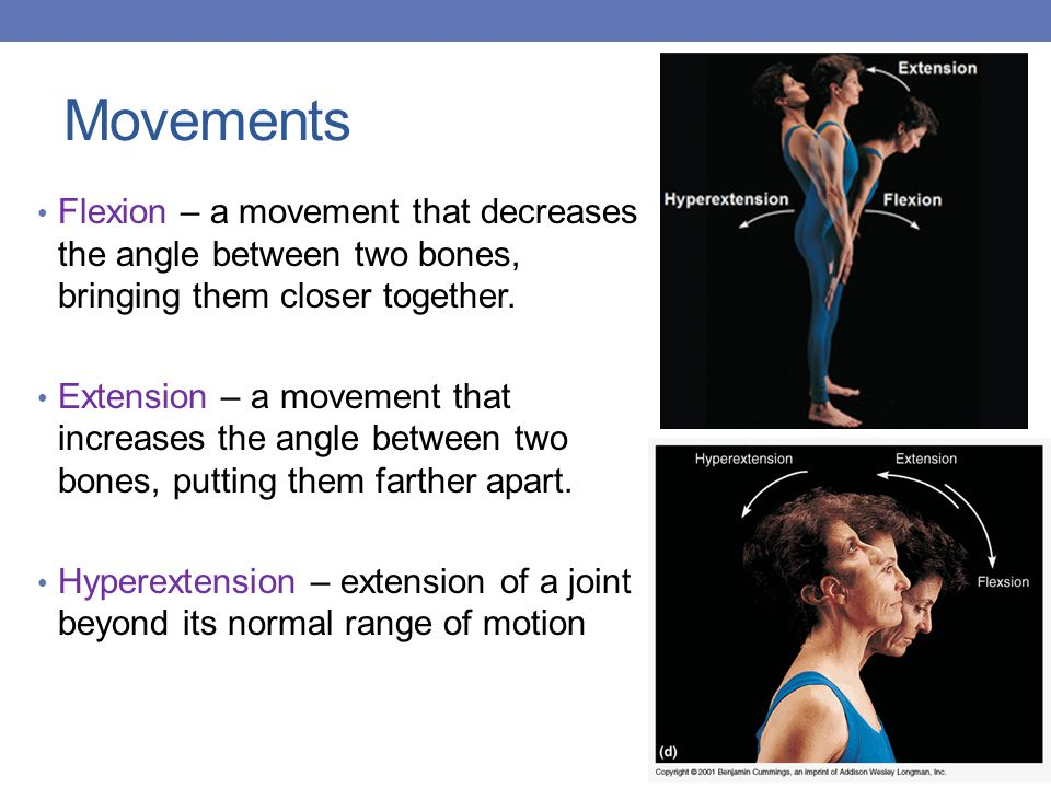Movements Flexion – a movement that decreases the angle between two bones, bringing them closer together.