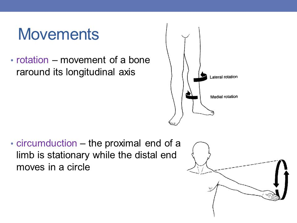 Movements rotation – movement of a bone raround its longitudinal axis