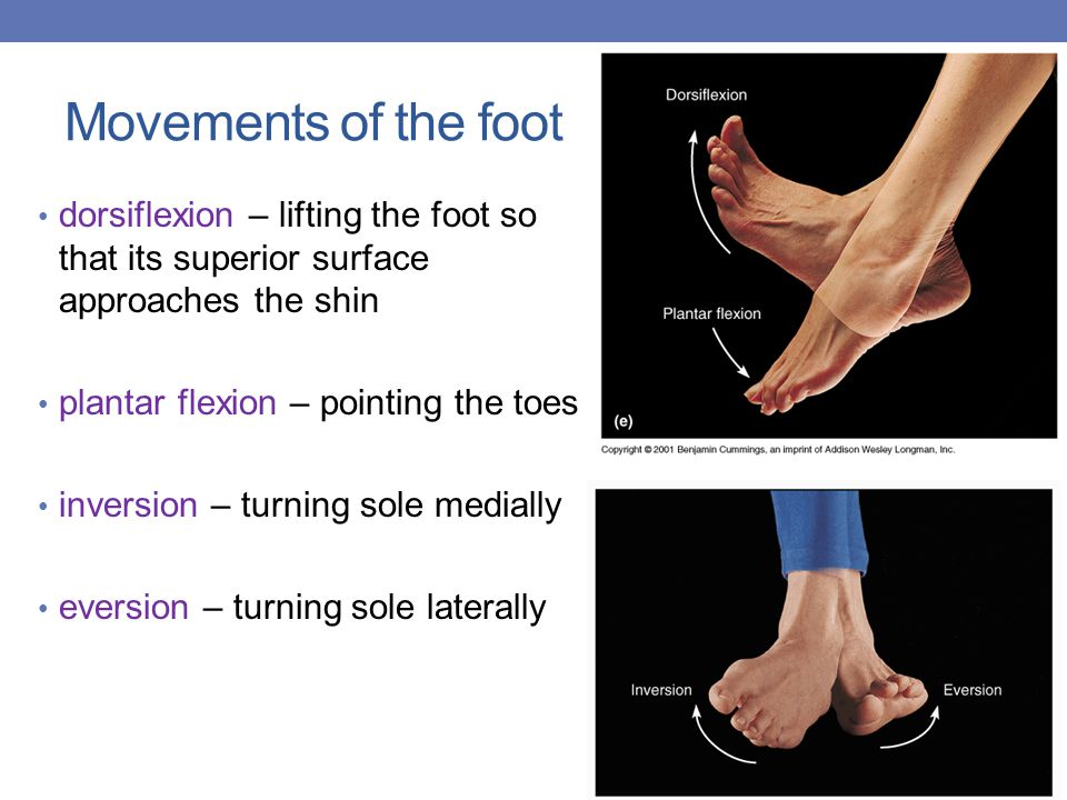 Movements of the foot dorsiflexion – lifting the foot so that its superior surface approaches the shin.
