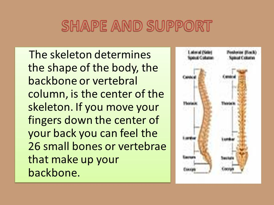 SHAPE AND SUPPORT