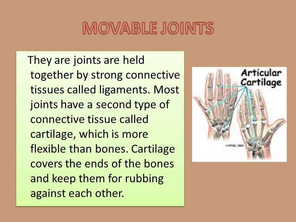 MOVABLE JOINTS
