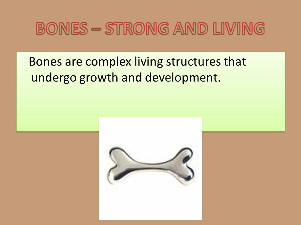BONES – STRONG AND LIVING