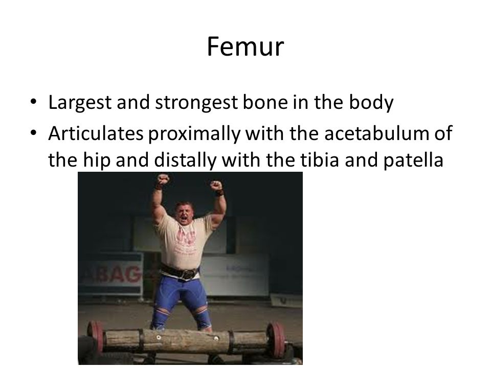 Femur Largest and strongest bone in the body