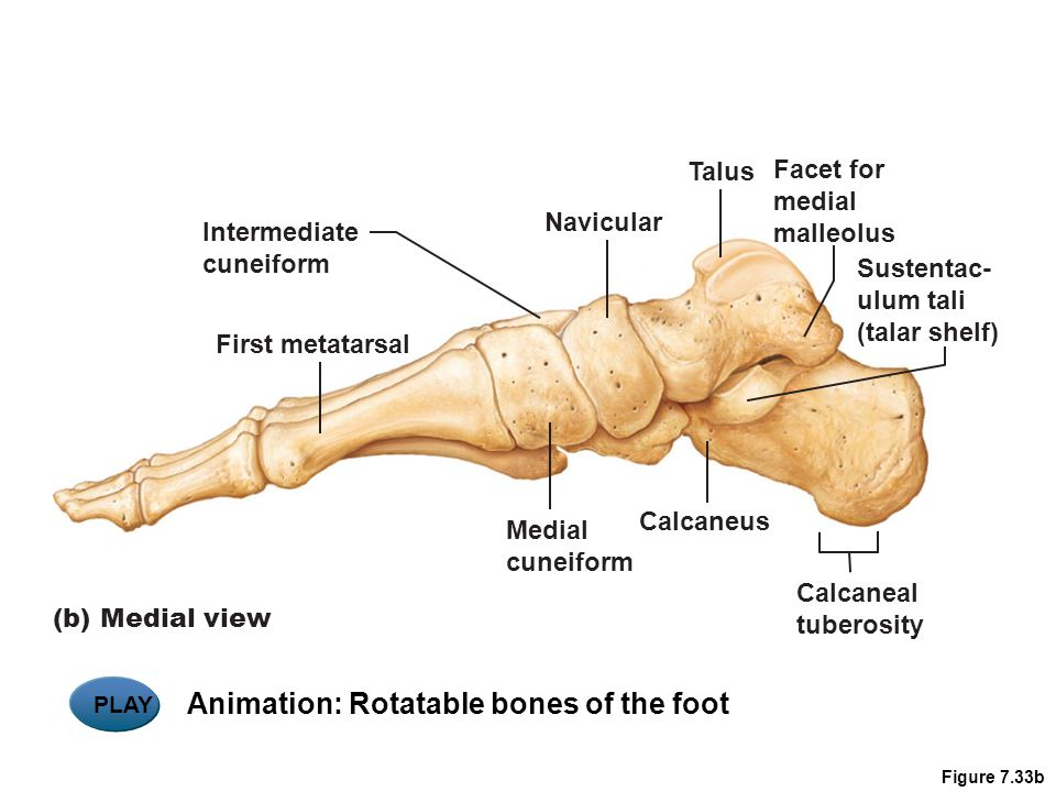 Animation: Rotatable bones of the foot