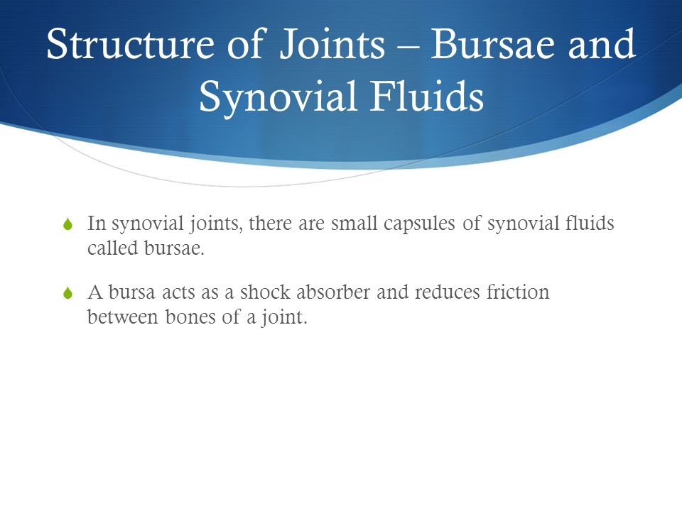 Structure of Joints – Bursae and Synovial Fluids