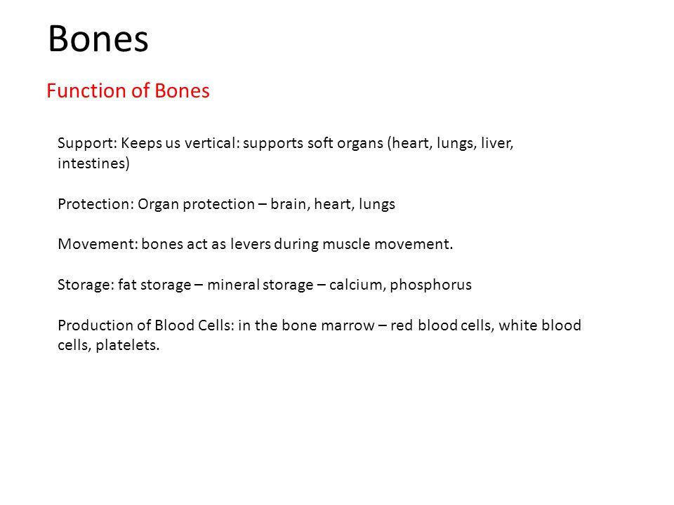 Bones Function of Bones
