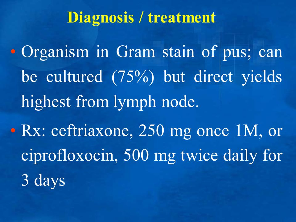 Diagnosis / treatment Organism in Gram stain of pus; can be cultured (75%) but direct yields highest from lymph node.