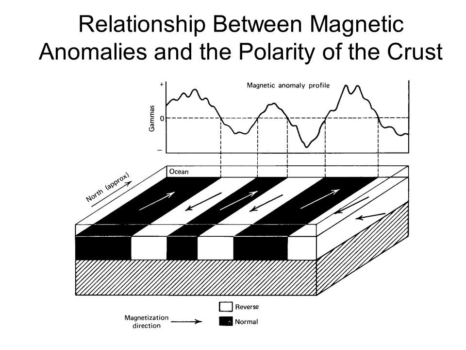 Relationship Between Magnetic Anomalies and the Polarity of the Crust