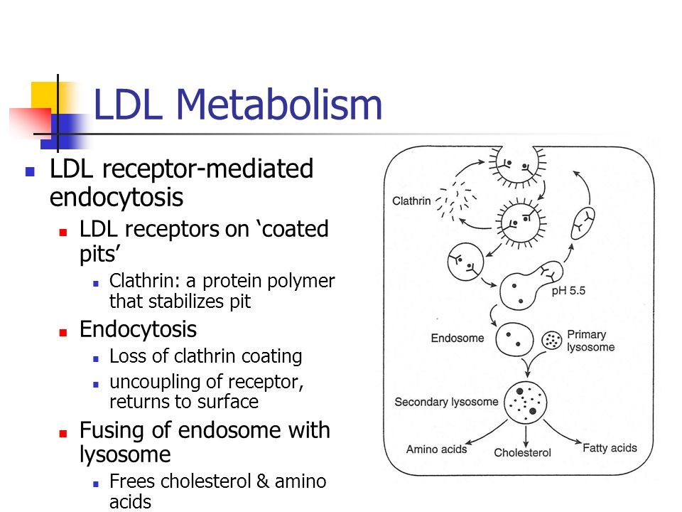LDL Metabolism LDL receptor-mediated endocytosis