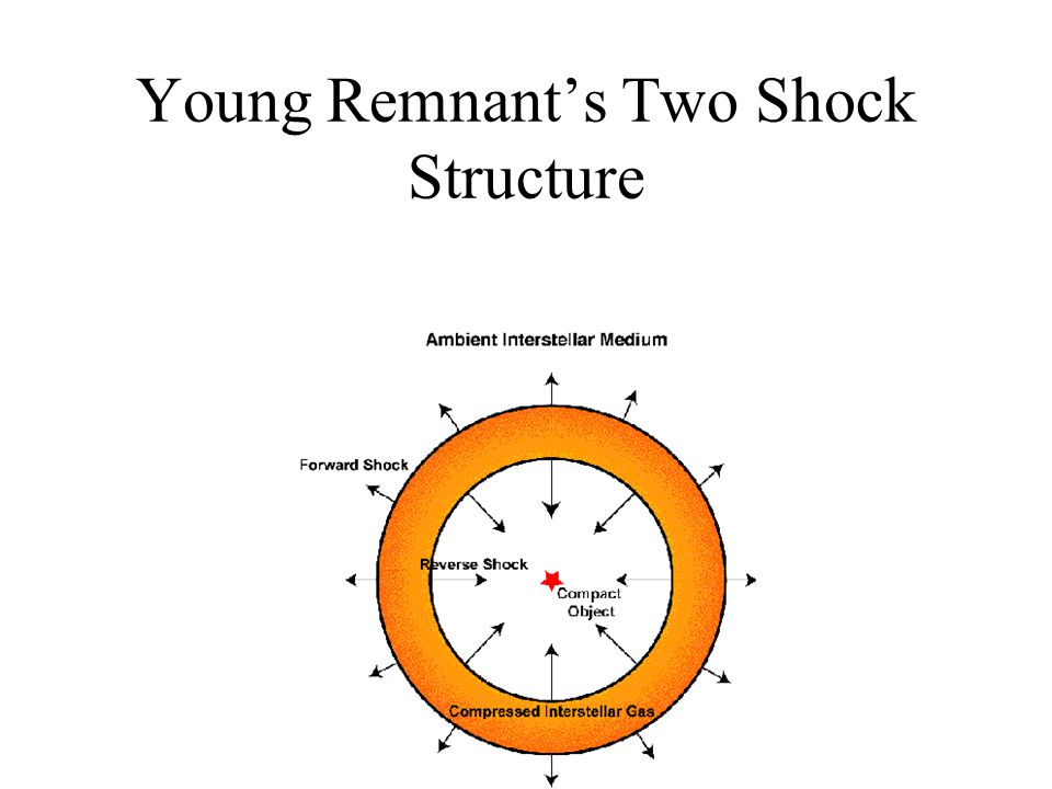 Young Remnant's Two Shock Structure