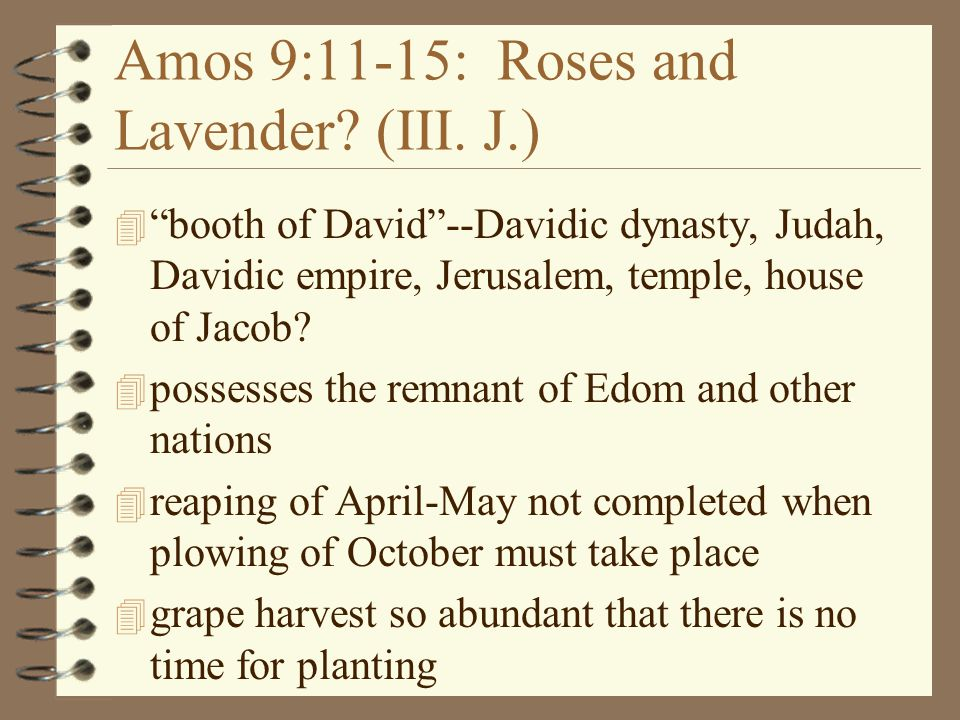 Amos 9:11-15: Roses and Lavender (III. J.)