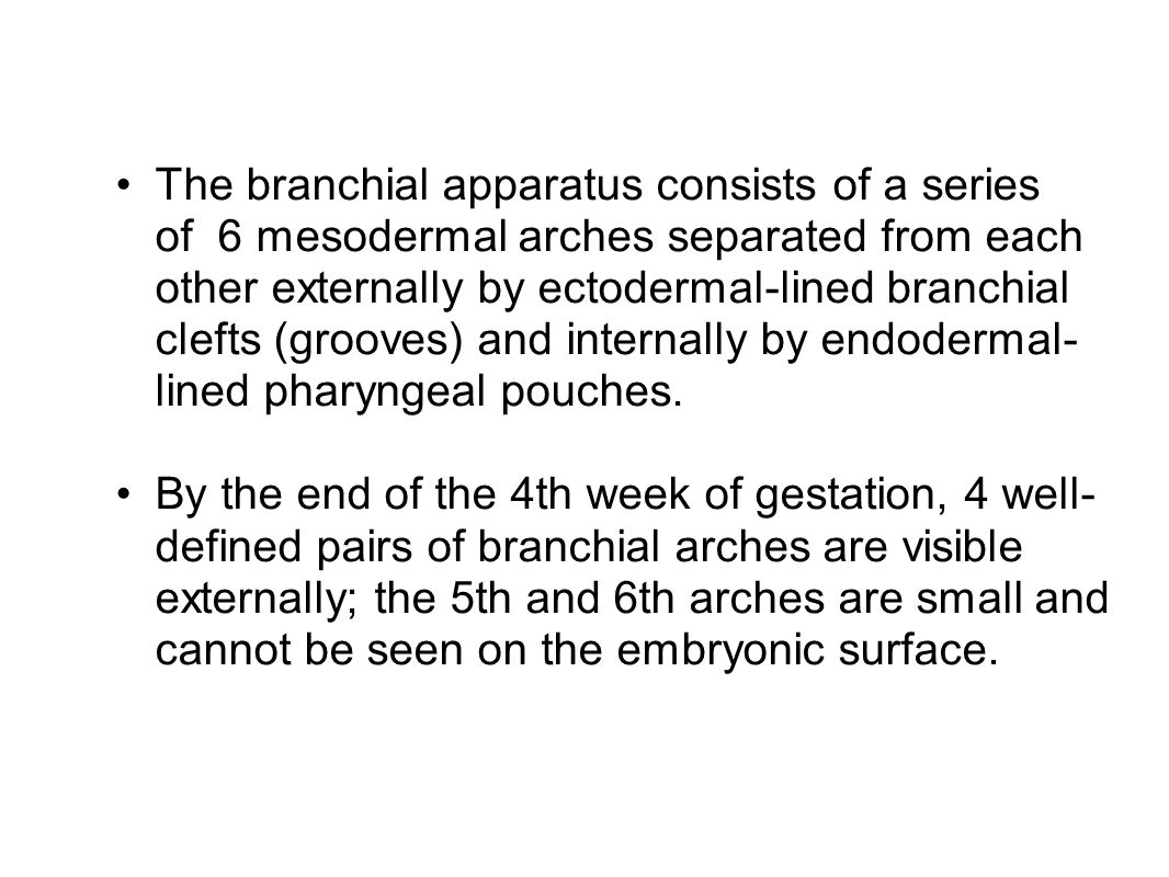 The branchial apparatus consists of a series of 6 mesodermal arches separated from each other externally by ectodermal-lined branchial clefts (grooves) and internally by endodermal- lined pharyngeal pouches.