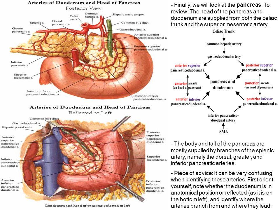 Finally, we will look at the pancreas