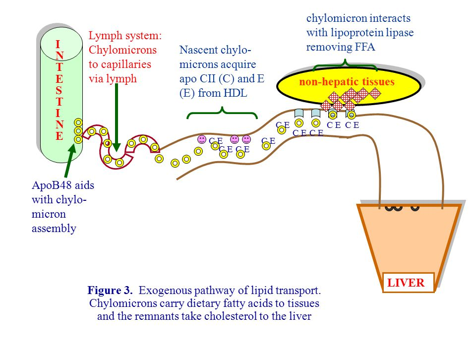 chylomicron interacts with lipoprotein lipase removing FFA