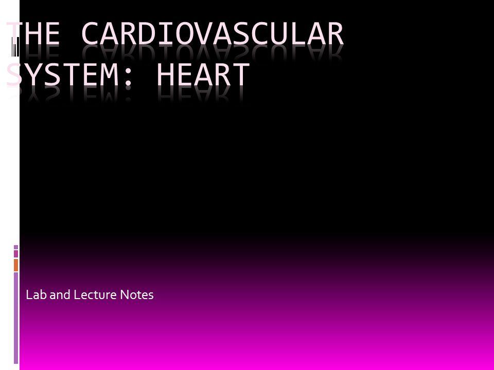 The Cardiovascular system: Heart