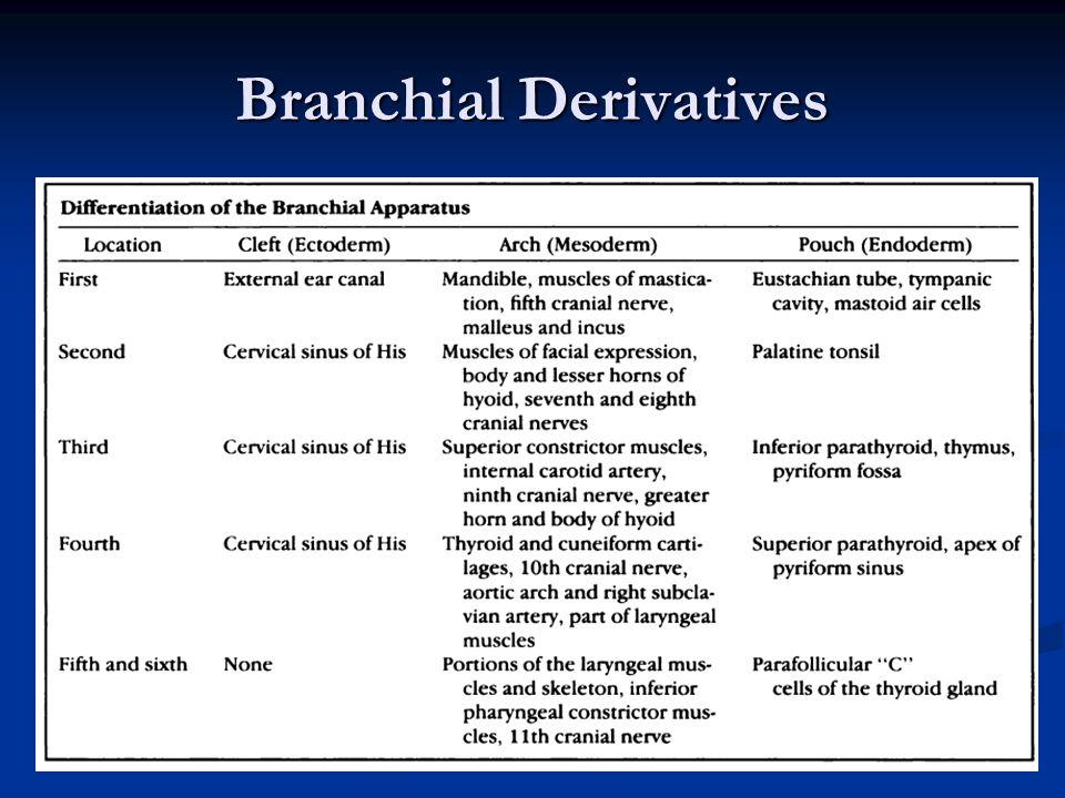 Branchial Derivatives