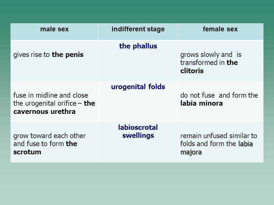 labioscrotal swellings