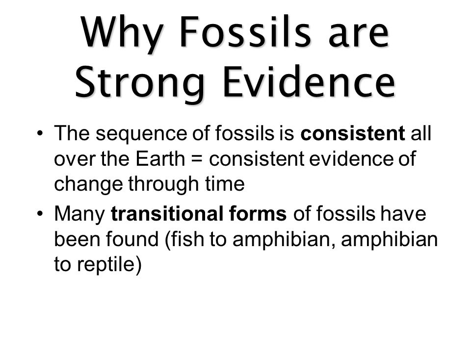 Why Fossils are Strong Evidence