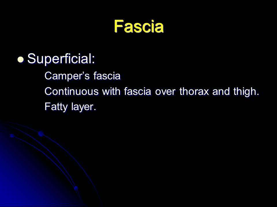 Fascia Superficial: Camper's fascia