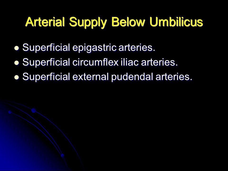 Arterial Supply Below Umbilicus