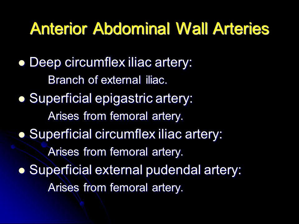 Anterior Abdominal Wall Arteries