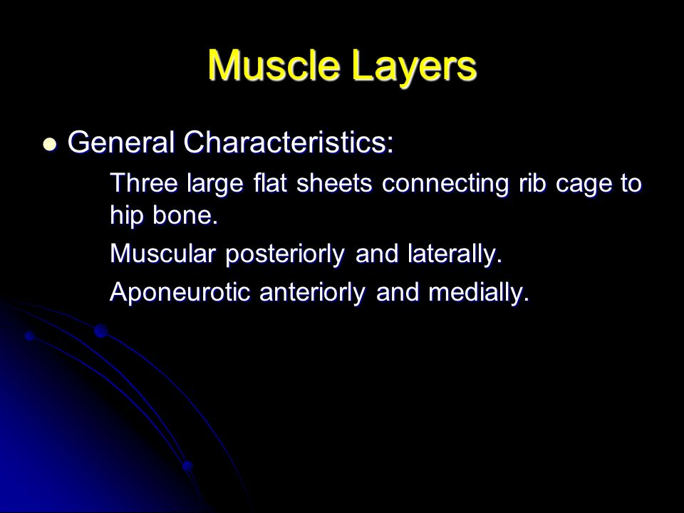 Muscle Layers General Characteristics: