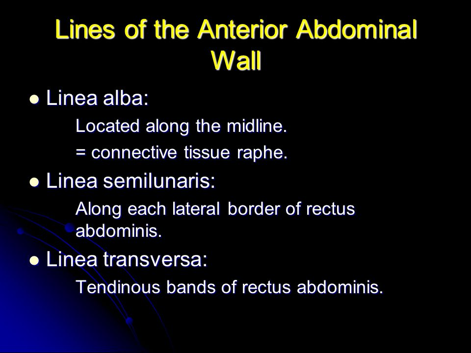 Lines of the Anterior Abdominal Wall