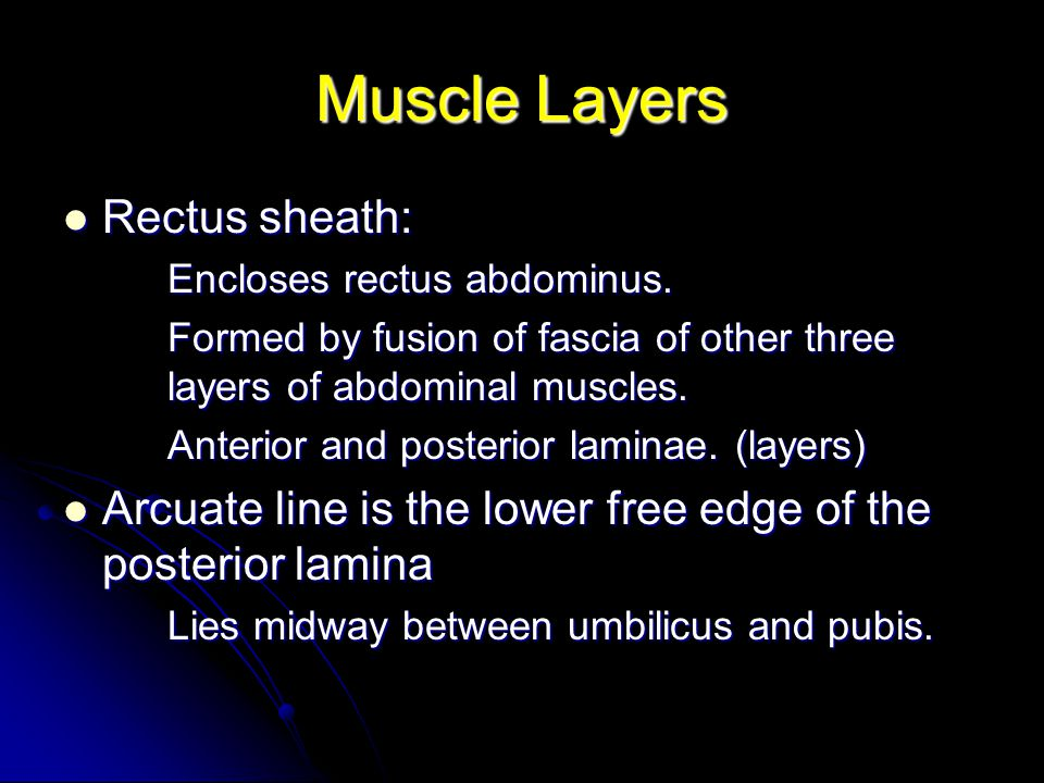 Muscle Layers Rectus sheath: