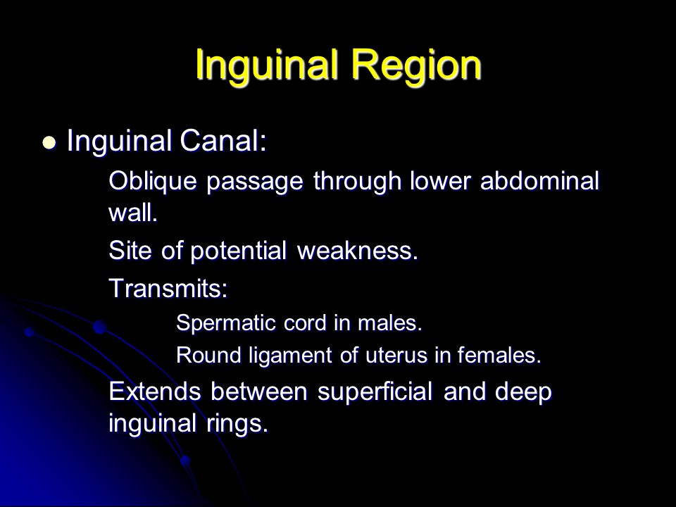 Inguinal Region Inguinal Canal: