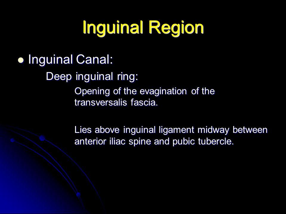 Inguinal Region Inguinal Canal: Deep inguinal ring:
