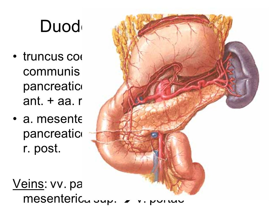 Duodenum – blood supply