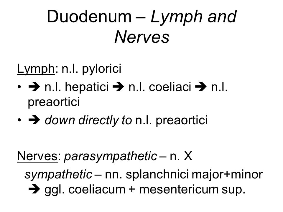 Duodenum – Lymph and Nerves