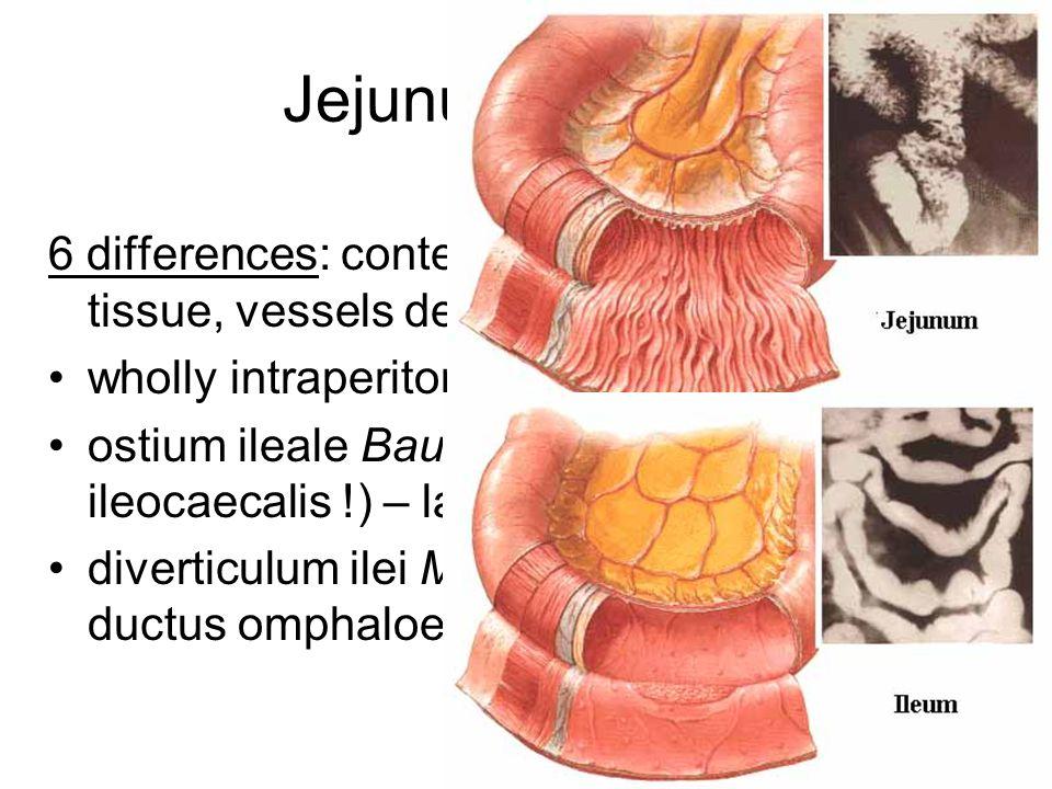 Jejunum et ileum 6 differences: content, width, folds, lymphoid tissue, vessels density and arrangement.