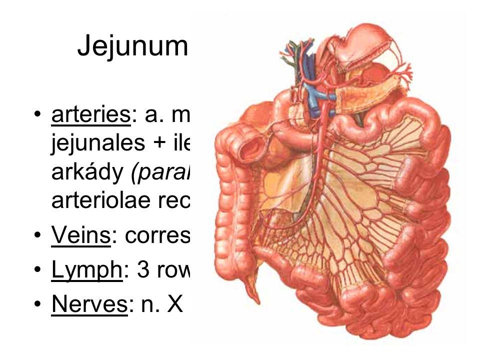 Jejunum + ileum - supply