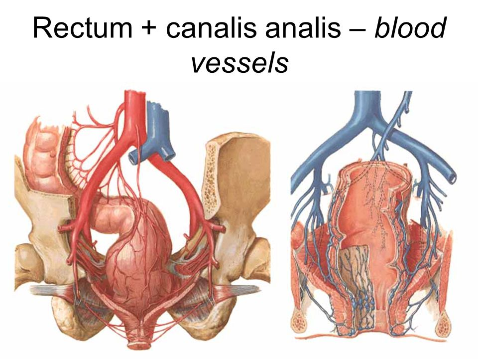 Rectum + canalis analis – blood vessels