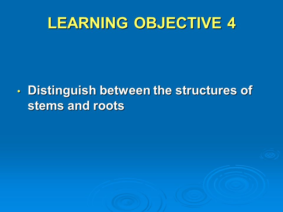 LEARNING OBJECTIVE 4 Distinguish between the structures of stems and roots