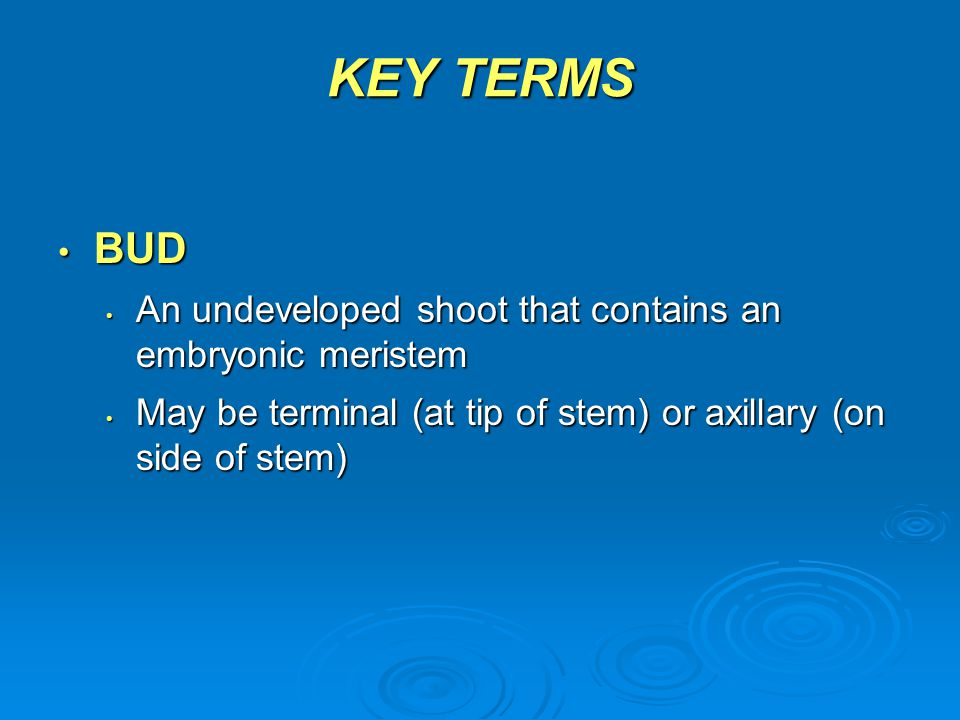 KEY TERMS BUD An undeveloped shoot that contains an embryonic meristem