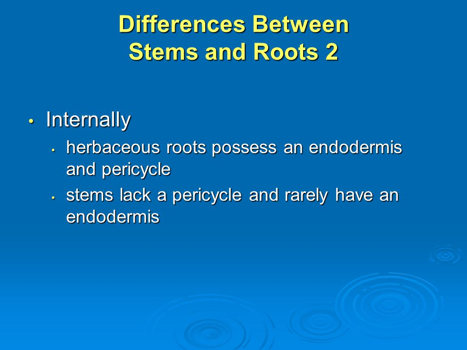 Differences Between Stems and Roots 2