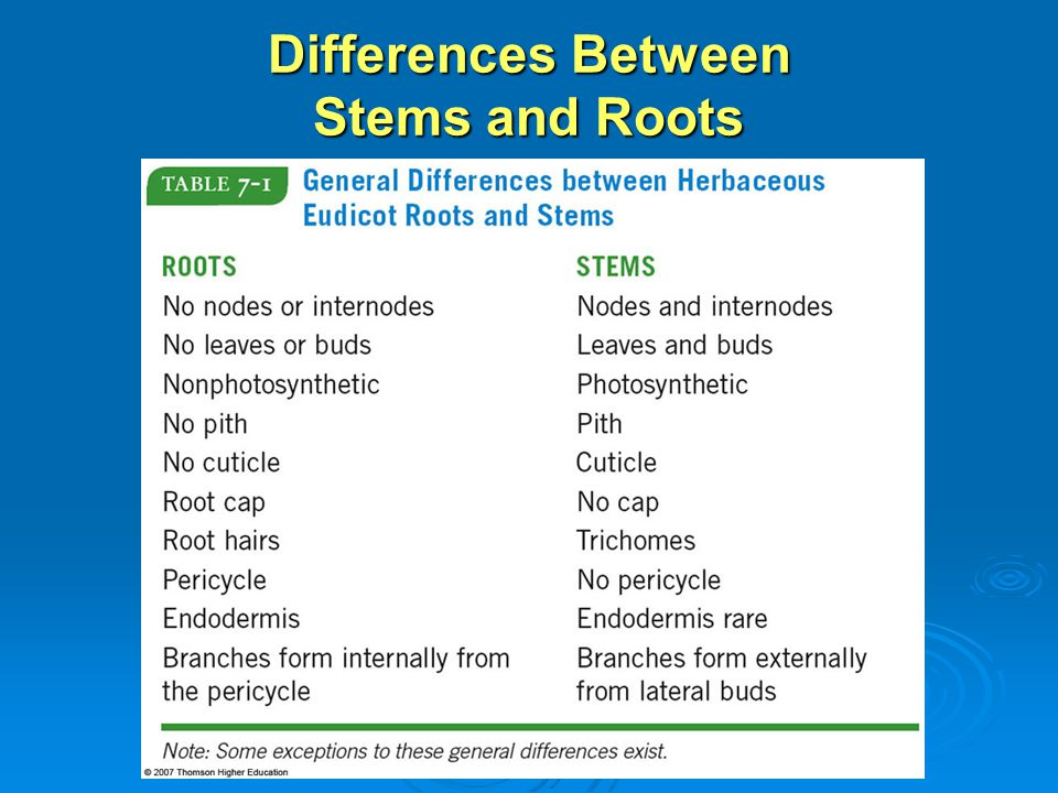 Differences Between Stems and Roots