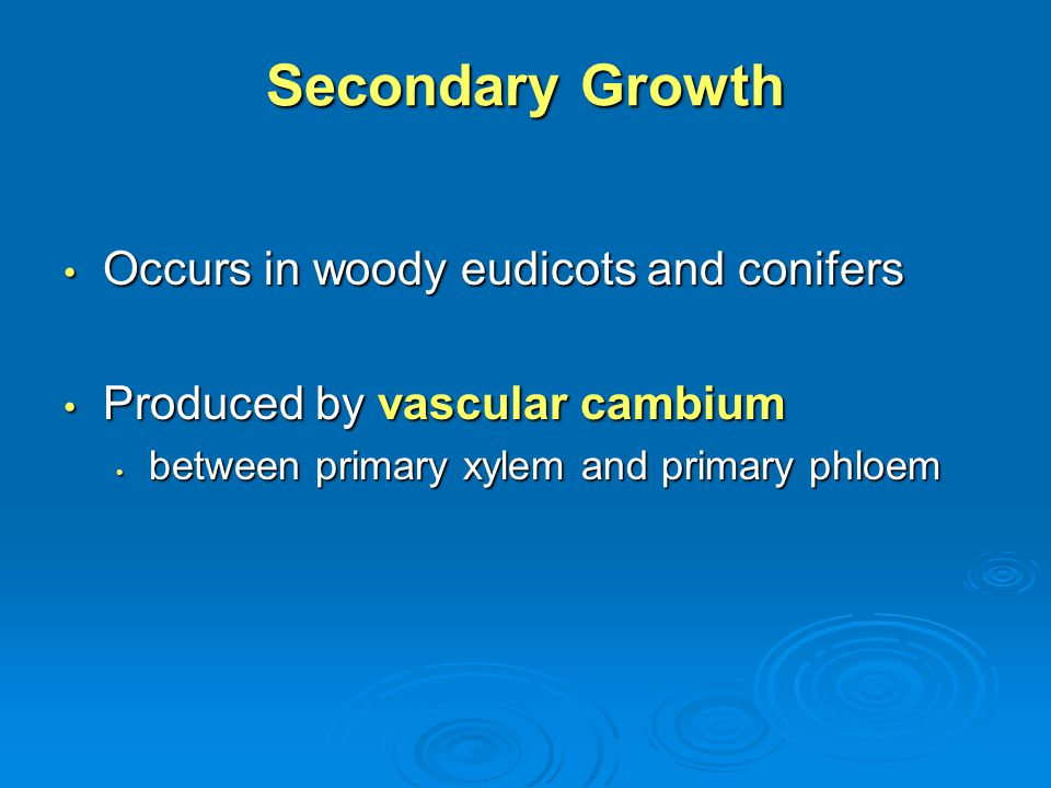 Secondary Growth Occurs in woody eudicots and conifers