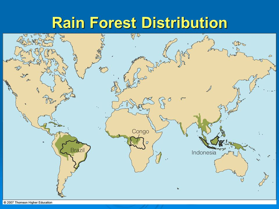 Rain Forest Distribution