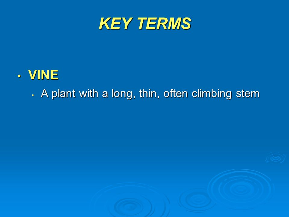 KEY TERMS VINE A plant with a long, thin, often climbing stem