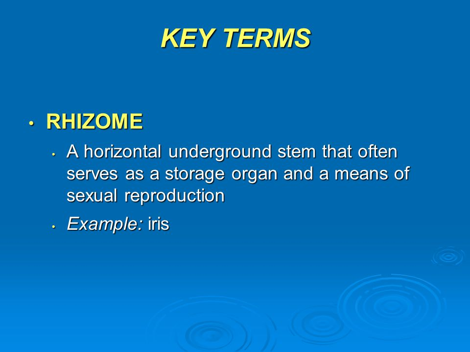KEY TERMS RHIZOME. A horizontal underground stem that often serves as a storage organ and a means of sexual reproduction.